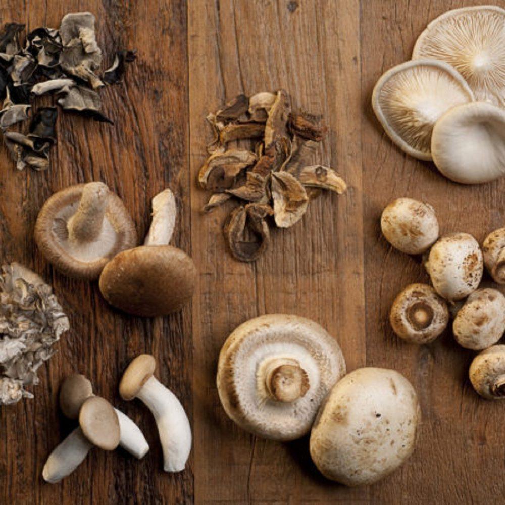 Los mejores hongos medicinales