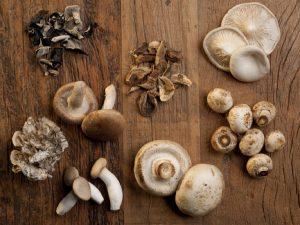 Bienfaits des champignons médicinaux