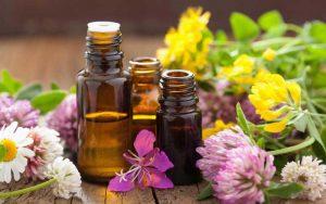 Curación con plantas, ¿por qué y cómo