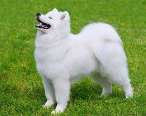 Good Doggie cuanto cuesta, precio